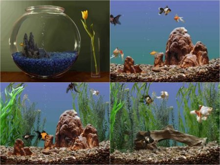 Goldfish Aquarium 3D Screensaver 1.02