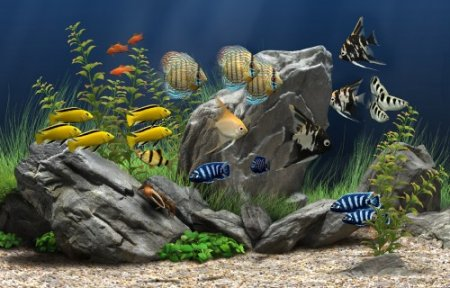 Portable Dream Aquarium 3D Screensaver 1.237