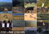 Замбези. Источник жизни / National Geographic. Zambezi. Source of Life (2010) HDTVRip 720р
